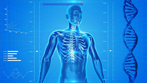 image of human body - pain management helps you avoid a life in pain